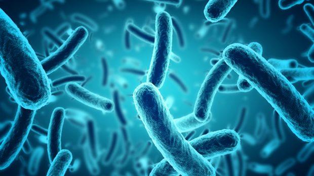 """Covid-19, lo studio: """"Il microbiota potrebbe riflettere la gravità della malattia"""""""