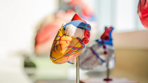 Miocardite sintomi cure e cause frequenti
